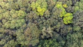 Fundo verde natural da floresta da mola da vista a?rea imagem de stock royalty free