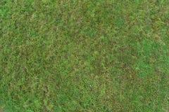 Fundo verde real da textura de uma grama imagens de stock