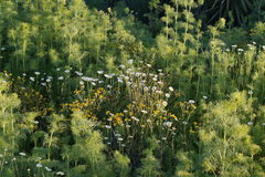 Fundo verde selvagem Fotos de Stock