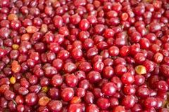 Fundo vermelho brilhante das bagas, contexto colorido, estação de outono-inverno fotos de stock royalty free