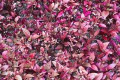 Fundo vermelho da grama Fotografia de Stock Royalty Free