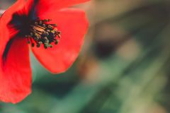 Fundo vermelho da natureza da flor imagens de stock royalty free