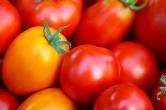 Fundo vermelho dos tomates Imagens de Stock