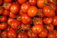 fundo vermelho dos tomates de cereja Imagem de Stock