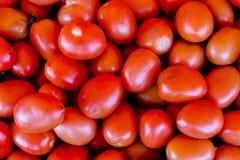 Fundo vermelho dos tomates Grupo de tomates foto de stock royalty free