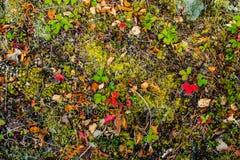 Fundo vibrante da folha da cor Fotos de Stock