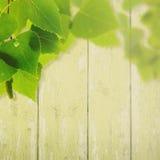 Fundos abstratos do verão e da mola Fotografia de Stock