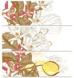 Fundos ajustados com flores do limão Fotografia de Stock