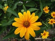 Fundos bonitos Bandeira das flores Background Paisagem da natureza Imagens de Stock Royalty Free
