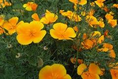 Fundos bonitos da natureza Bandeira das flores Background Paisagem da natureza Imagem de Stock Royalty Free
