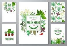 Fundos brilhantes com ervas frescas Foto de Stock Royalty Free