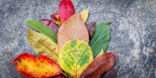 Fundos coloridos das folhas Foto de Stock