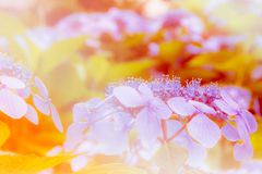 Fundos da flor em colorido morno Imagens de Stock Royalty Free