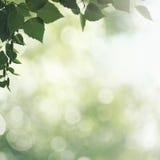 Fundos da mola e do verão da beleza Imagem de Stock Royalty Free