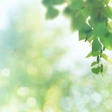 Fundos da mola e do verão da beleza Imagem de Stock