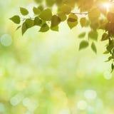 Fundos da mola e do verão da beleza Foto de Stock Royalty Free