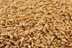 Fundos da semente de girassol Imagens de Stock Royalty Free