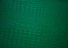Fundos de couro verdes, retrato clássico Fotografia de Stock Royalty Free