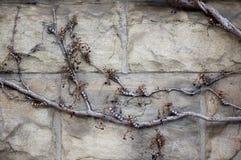 Fundos decorativos textured sumário Fotos de Stock