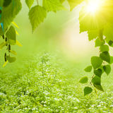 Fundos do verão da beleza Imagem de Stock Royalty Free