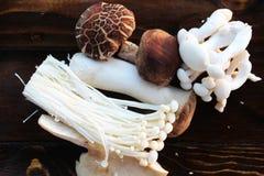 Fundos dos cogumelos Fotografia de Stock