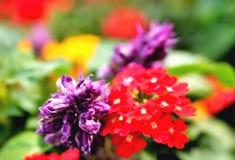 Fundos florais coloridos, flores borradas borradas de cores brilhantes em um fundo das folhas verdes, amarelo vermelho brilhante imagens de stock royalty free
