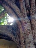 Fundos: luz do sol Imagens de Stock