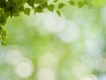 Fundos naturais abstratos fotos de stock