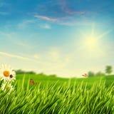 Fundos naturais abstratos com folha do verão Fotos de Stock