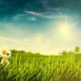 Fundos naturais abstratos com folha do verão Imagem de Stock