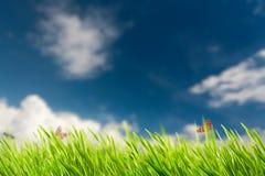 Fundos naturais abstratos com folha do verão Imagens de Stock