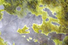 Fundos verde-claro como continentes imagens de stock