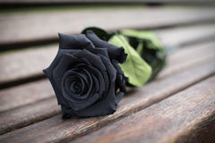Funeral Stock Images