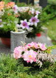 Funeral flowers. Placed on the grave at All souls holiday royalty free stock photos