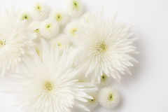 Funeral flowers. I express with white flowers image of funeral Royalty Free Stock Photos