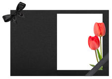 Funeral frame with tulips Stock Photography