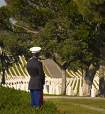 Marine in National Military Cemetery Stock Photography