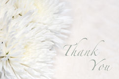 Funeral Thank You Card. Elegant funeral Thank You card with white chrysanthemums Royalty Free Stock Photography