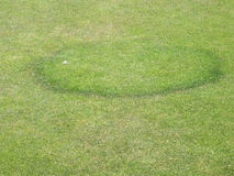 Fungal disease on bowling green. Fungal disease on a fine turf grass bowling green showing the characteristic circular ring Stock Images