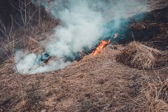 Fungal grass and smoke that spreads through the earth are very dangerous to human health stock images