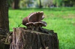 Mushroom royalty free illustration