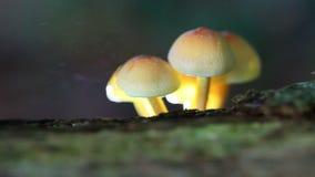 Fungal spores stock video