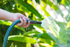 Fungera bevattna trädgården från slangen Royaltyfri Bild