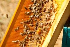 fungera för apiarybin Arkivfoto