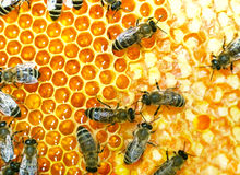 fungera för bin Arkivfoto