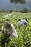 fungera för harvesters Royaltyfria Bilder