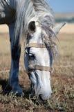 Fungerande häst Arkivbild