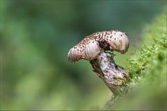 Funghi в лесе Стоковое Фото
