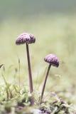 Funghi в лесе Стоковое Изображение