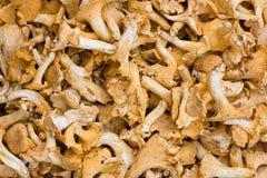 Funghi Fotografia Stock